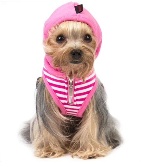 yorkie harness 17 best images about puppia on vests yorkie and the pug