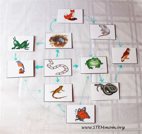 food chain template cards food chain project food