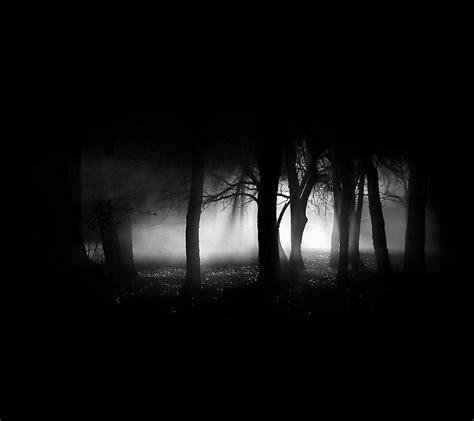 wallpaper dark tree dark trees hd wallpapers