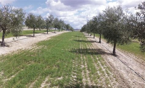 Olive Garden Hershey Pa by Cover Crops May Be Used To Mitigate And Adapt To Climate