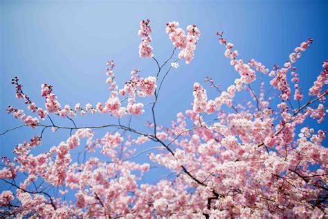 foto fiori di primavera l equinozio di primavera wired