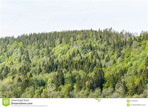 view of forest habitat royalty free stock photograph in woodland view stock photo image 91725616