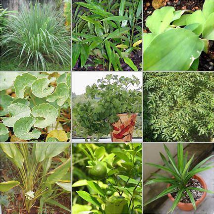 Obat Amandel Yg Herbal macam macam tanaman obat dan khasiatnya belajar berkebun