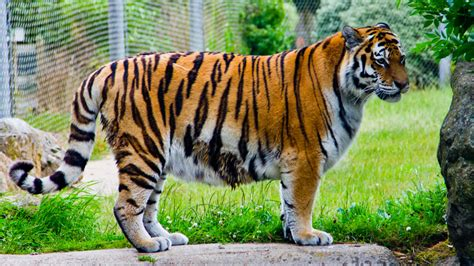 discount vouchers for uk zoos marwell zoo discount voucher vouchers lets go with the