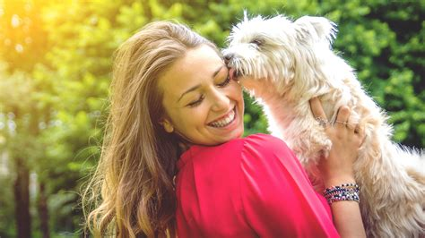 study shows owning  dog lowers risk  cardiovascular