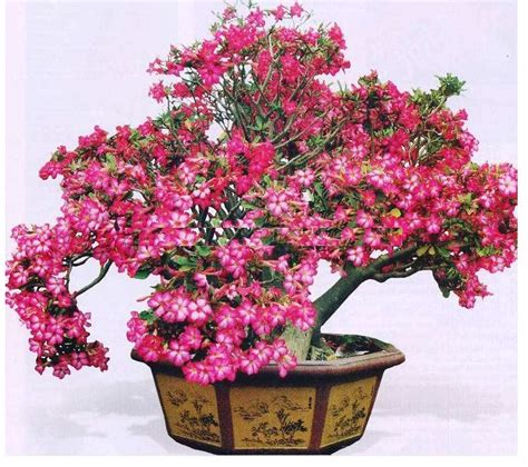 Buku Menanam Merawat Keladi Hias cara merawat bunga kamboja jepang tanaman hias bunga