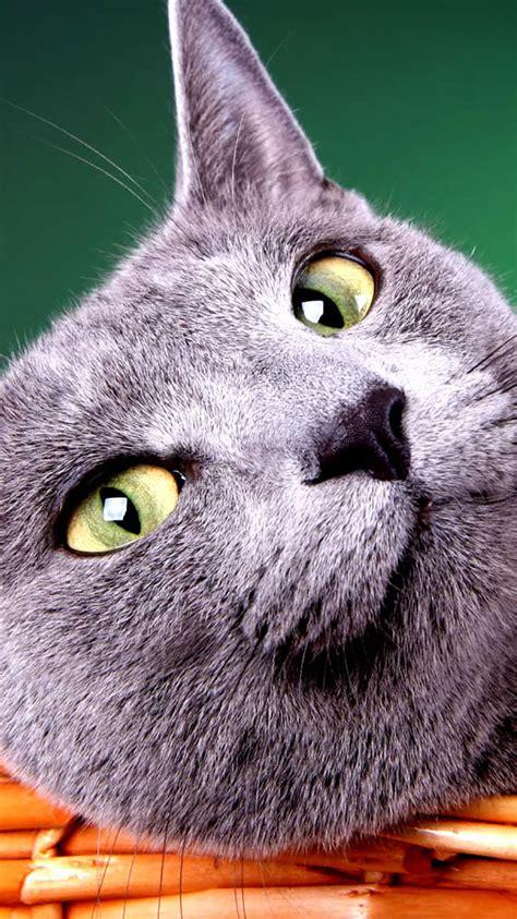 cat wallpaper pack zip hd cat wallpaper pack driverlayer search engine
