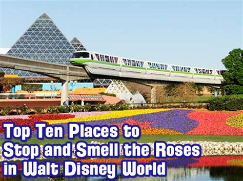 top 10 walt disney world wdw radio show 314 top ten places to stop and smell