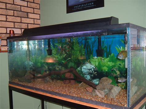 fish tank decorations 70 gallon top fin 75 gallon hooded
