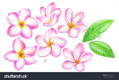 color drawings flower drawing image with color www imgkid the