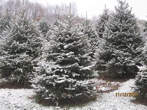 fun christmas tree places in se wisconsin southeast new york tree farms choose and cut trees tree lots with pre cut