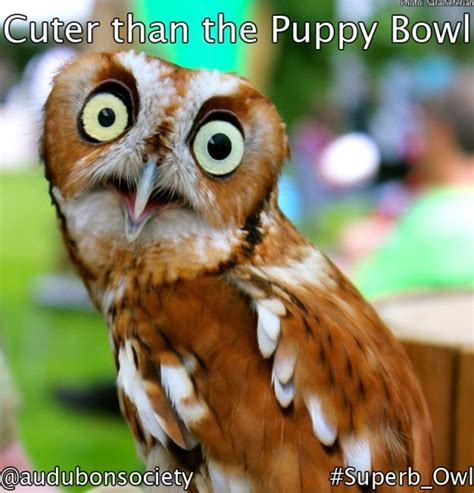 Superb Owl Meme - superb memes image memes at relatably com