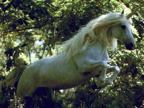 unicorns are real mystical unicorn and pegasus pinterest