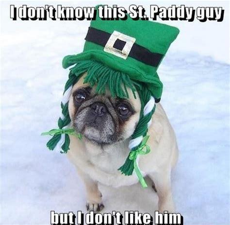 Funny St Patrick Day Meme - funny st patrick s day pug dog meme memes 33928908 497 486