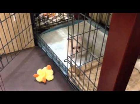 potty puppy apartment sparkle puppy apartment