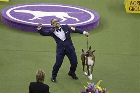 westminster show 2017 results westminster show 2017 results best of breed winners and day 2 recap bleacher report
