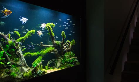 House Designing Aquarium Architecture Custom Aquarium Design