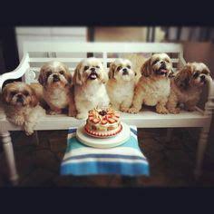 happy birthday shih tzu happy birthday shih tzu puppy postcard http www zazzle happy birthday shih tzu