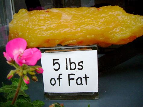 image 5 lbs of fat size 1000 x 752 type gif posted