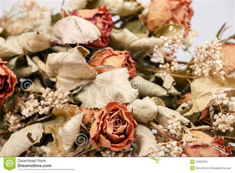 Bilder Aus Getrockneten Blättern by Blumenstrau 223 Getrockneten Mit Bl 228 Ttern