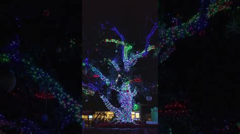 san diego zoo lights san diego zoo light