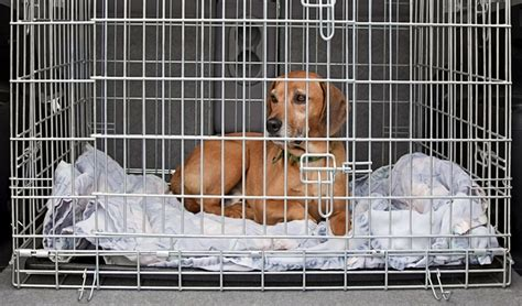 crate training 16 tips for crate training a dog effective step by step