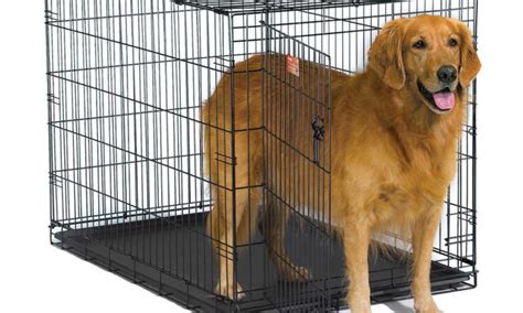 golden retriever crate the best wire crates for your golden retriever lucky golden retriever