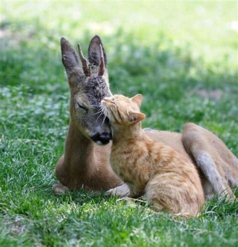 bettdecke tiere verliebte tiere niedliche tiere die ihre gef 252 hle ausdr 252 cken