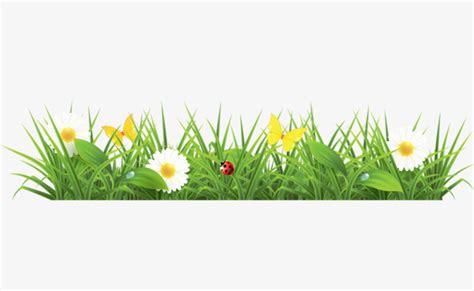 herbe  image de  herbe de petites fleurs blanches