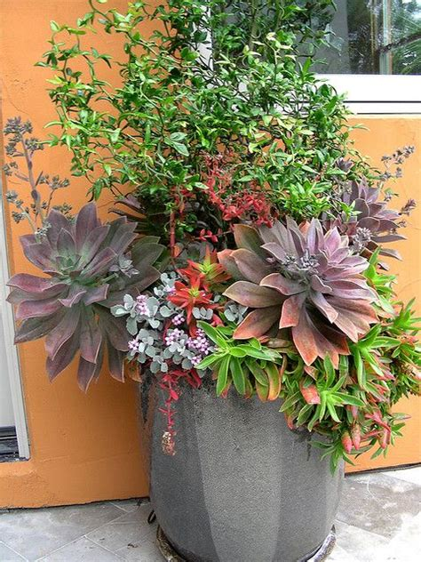 Succulent Container Gardens by Succulent Container Garden