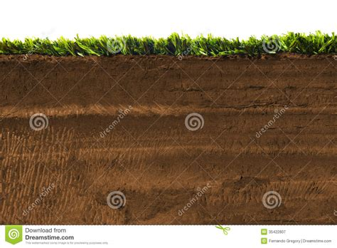 cross section of soil cross section of grass isolated on white royalty free