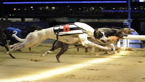 racing dogs the lord s dogs column sallis celebrates betfair arc 1 2 greyhounds