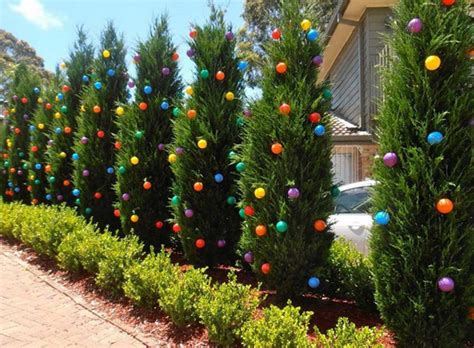 piper mountain christmas tree farm for sale the secret garden living trees planted as a screen