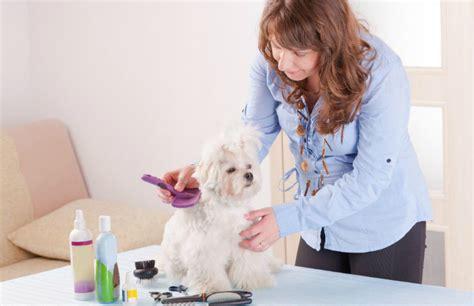 description of a professional groomer qc pet studies