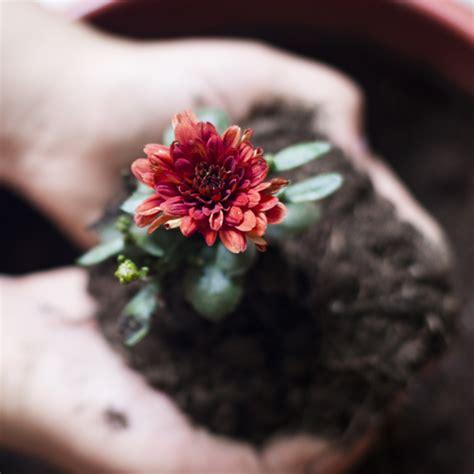 Plantation De Novembre by Quelle Fleur Planter En Novembre