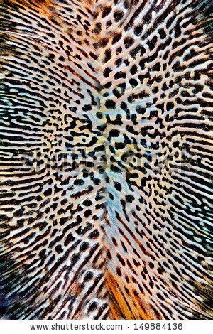 animal skin patterns stock photo images 20 829 animal skin patterns royalty free pictures and seamless animal skin pattern stock photo winter