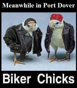 Funny Harley Davidson Memes - 103 best images about cool funny biker images on