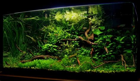 aquascape setup 17 best images about aquarium setups on pinterest