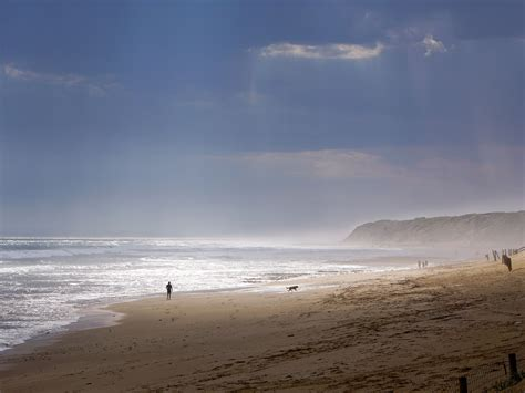 dog beaches  melbourne realestatecomau