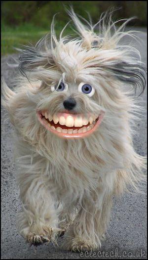woof woof puppies happy happy woof woof