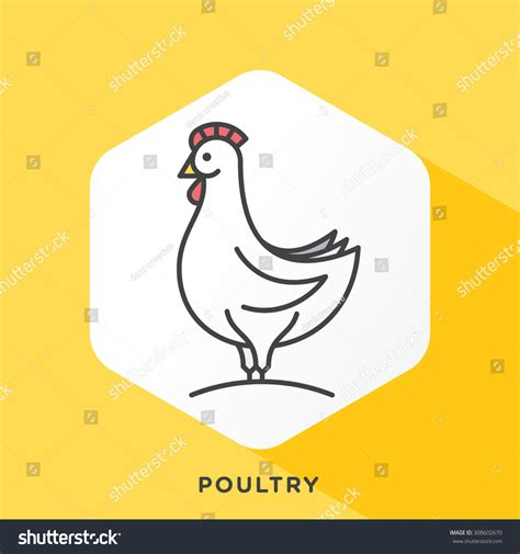 Outline Offset Color by Chicken Icon With Grey Outline And Offset Flat Colors Modern Style Minimalistic Vector