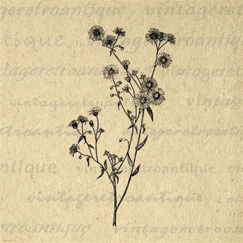 printable image wild daisy flower graphic wildflower