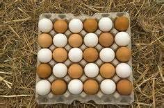 Backyard Chickens Washing Eggs 1000 Images About Chicken Coop Ideas On