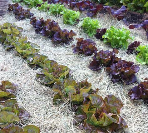 u vegetables florida garden design 31971 garden inspiration ideas