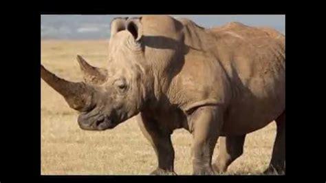 imagenes animales de africa los 8 animales mas peligrosos de africa youtube