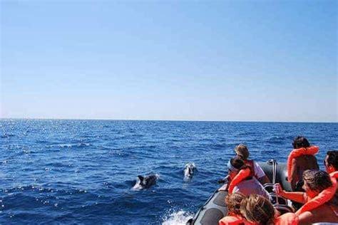 boat trip portimao dolphins in the wild boat trip from portim 227 o algarve