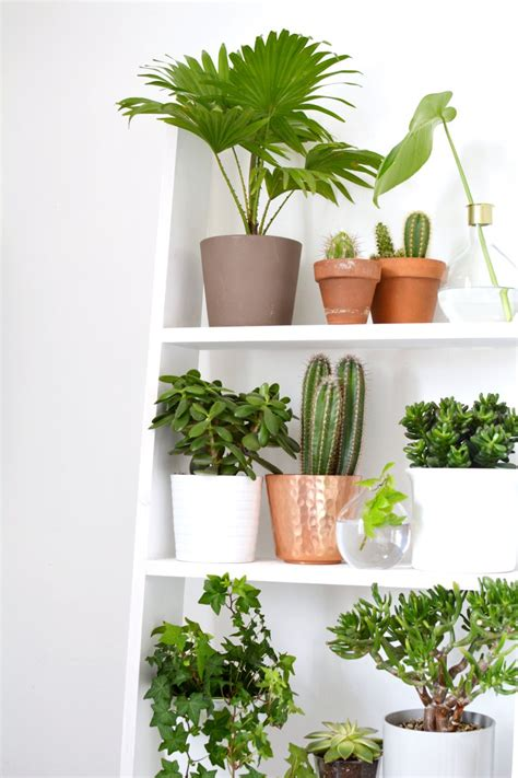 plants home decor 4 ideas for decorating with plants burkatron