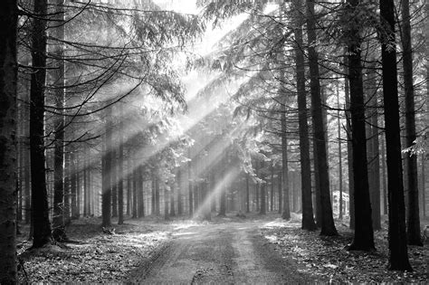 black and white woodland wallpaper black and white forest wallpaper wallpapersafari