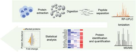 proteomics workflow cf proteomics leibniz institute on aging fli