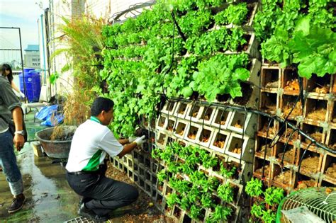Vertical Food Garden Kasetsart In Thailand Builds An Innovative